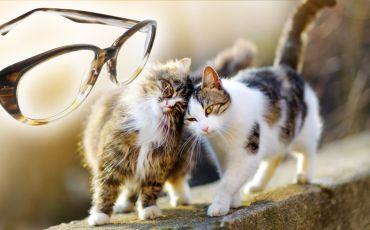 Babykatzen und my-Spexx Brille Panea
