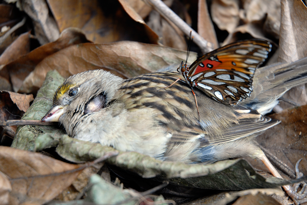 Dead Bird and Butterfly. Photo: Wendy Goodfriend