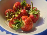 Organic homegrown strawberries
