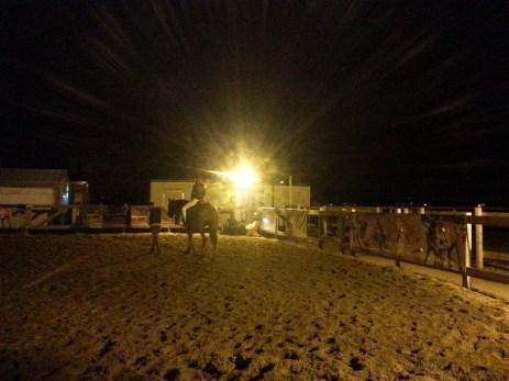 mopana-night-rodeo-01