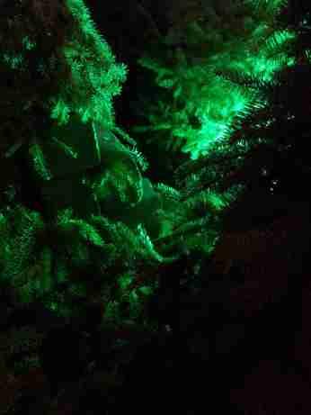 mopana-Christmas-trees-market-06