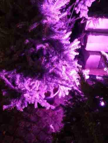 mopana-Christmas-trees-market-03