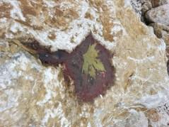 mopana-leaf-in-rock-04