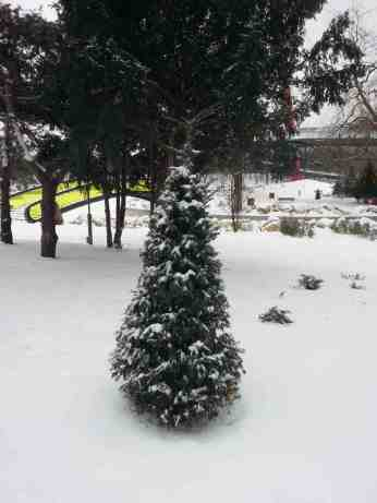 snow-in-the-park-02