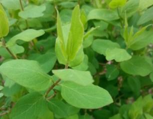 green-spring-01