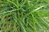 green-spring-05