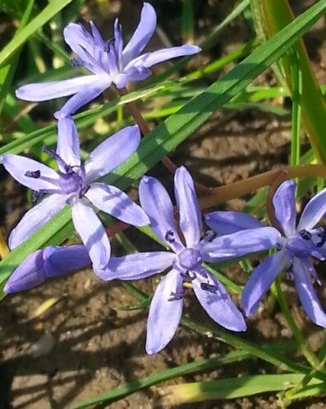 spring-dew-07