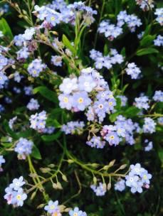 mopana-blue-like-your-eyes-02