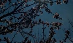 mopana-nature-splendor-04