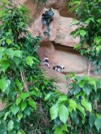 mopana-monkeys-vienna-aquarium-01