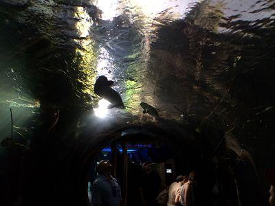 mopana-vienna zoo-aquarium-04