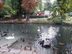 mopana-ducks-and-swans-02