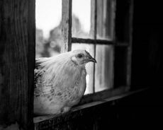 in-the-window-bw