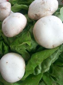mopana-champignon-mushrooms-02