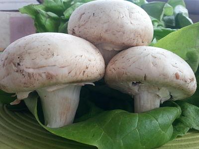 mopana-champignon-mushrooms-03