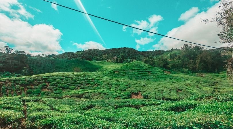 cameron highlands tea plantation save money whilst travelling