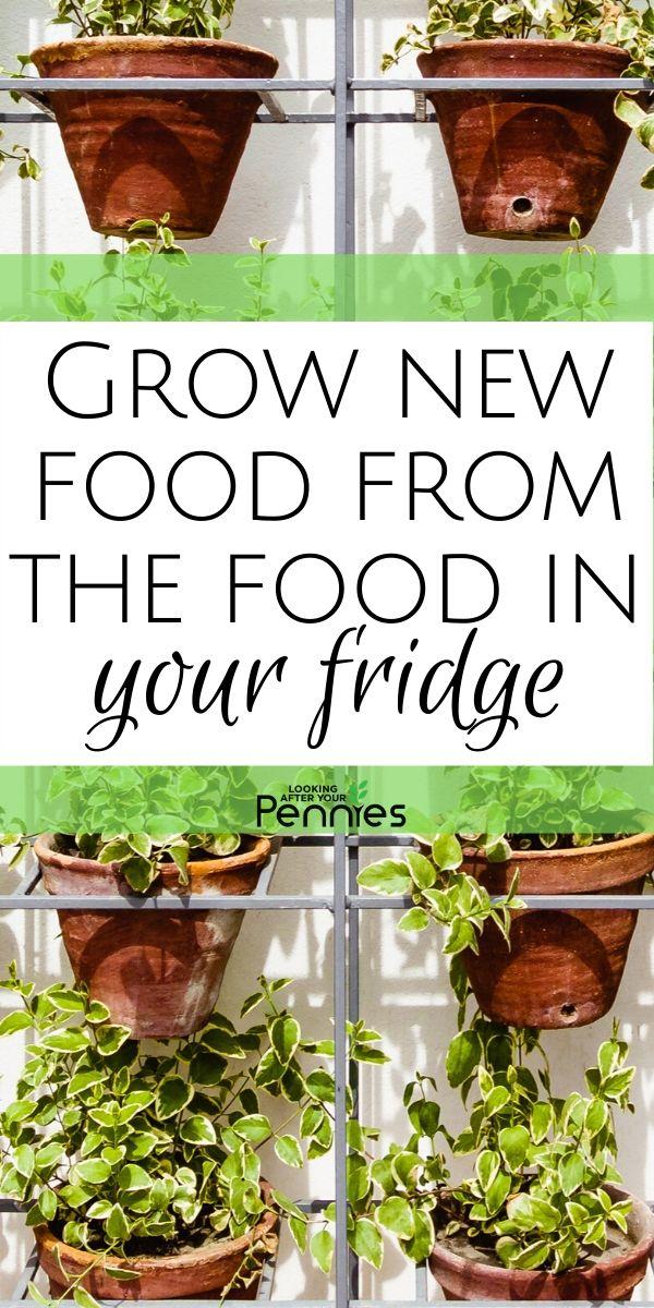 grow new food