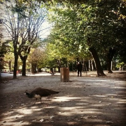 Palácio de Cristal - Avenida das Tílias