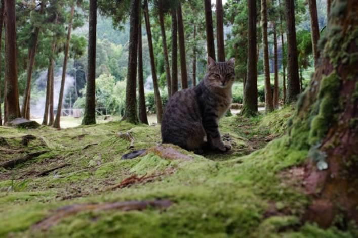 """Vale das Furnas e os seus gatos """"selvagens"""""""
