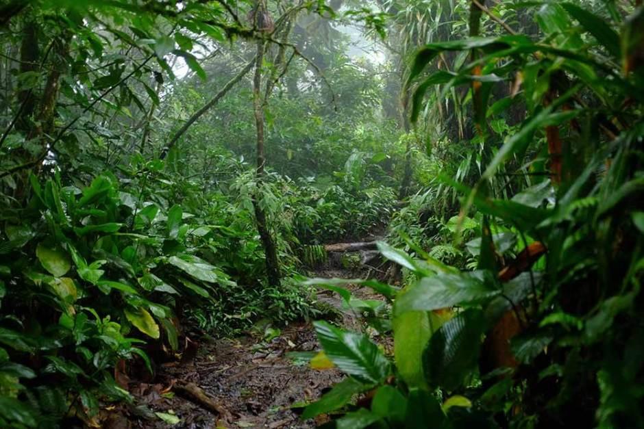 Floresta tropical no Vulcão Arenal