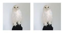 Dead Owl, 1997, © Roni Horn