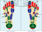Acupressure points in feet