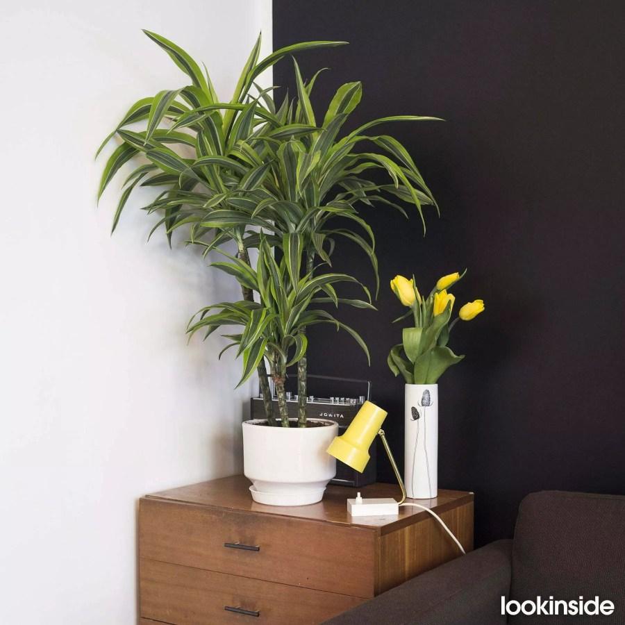 zieleń i żółć, czarna ściana