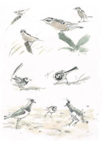 John Busby, A whinchat, pied wagtails and plovers embrace the wind