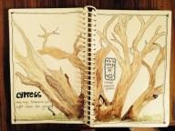 Cypress at LaL Bagh