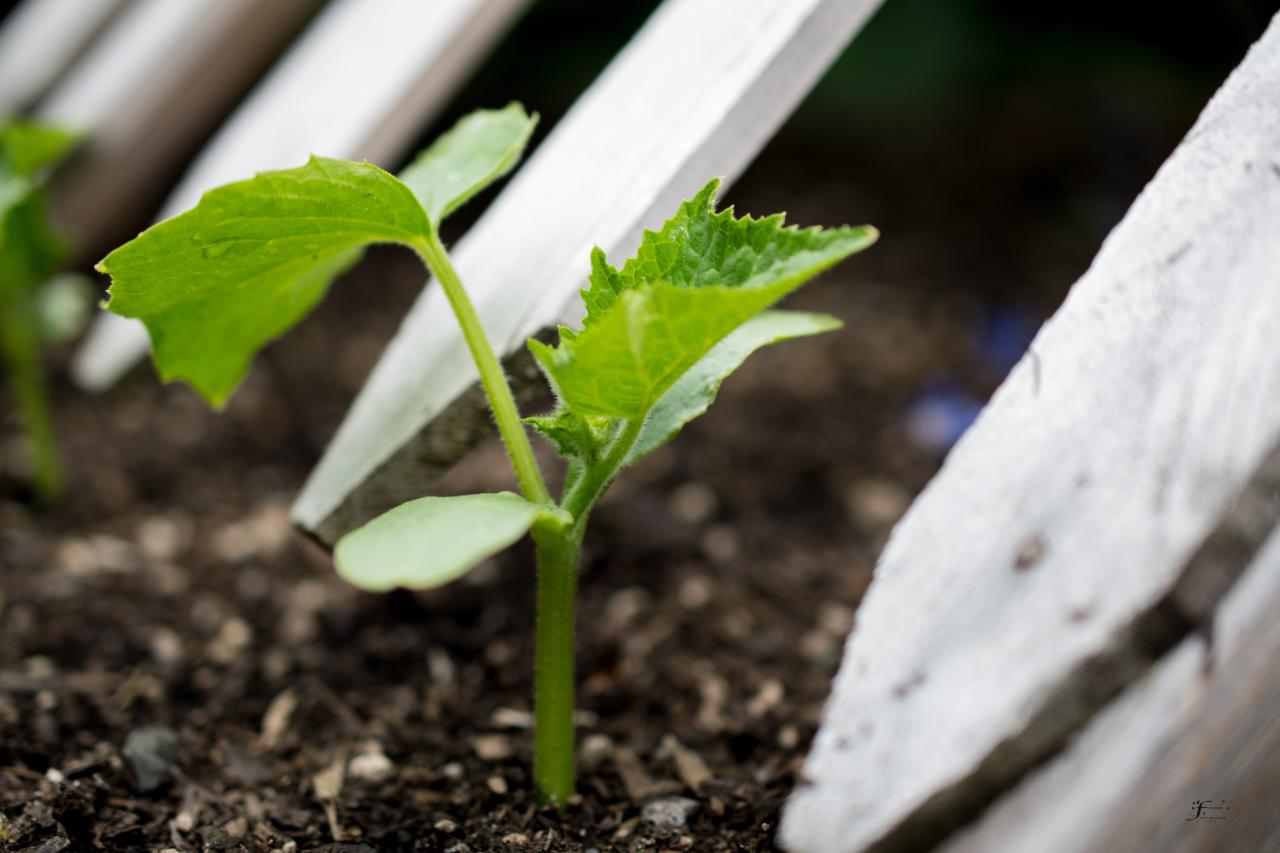 Keep Planting Those Seeds