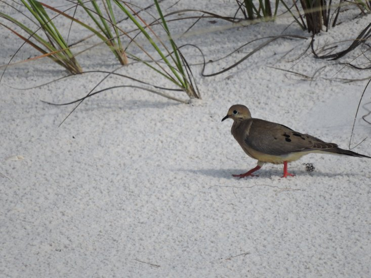 The Perdido Key State Park is famous for its white sand and rolling dunes.