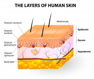 Layers of human skin