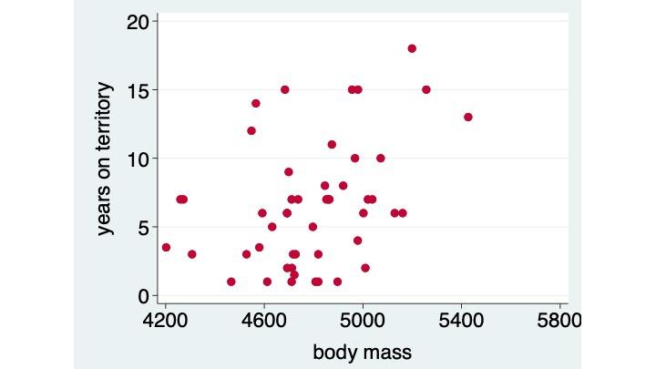 impact of lk size, male body size, on terr tenure