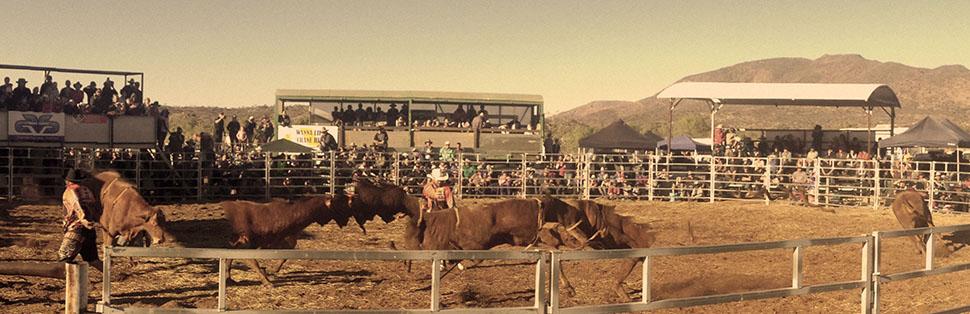 Harts-Range-rodeo-bulls-fighting