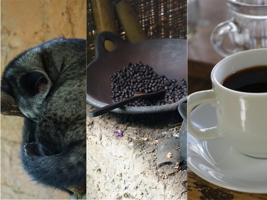 Kopi Luwak - civet eats the ripe bean, shits hard, gets collected, washed (of course), poo taken out, leftover roasted, brewed! world's most expensive coffee..Poo Juice, HOT!!!