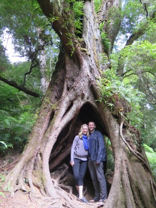 Inside an Ancient Tree