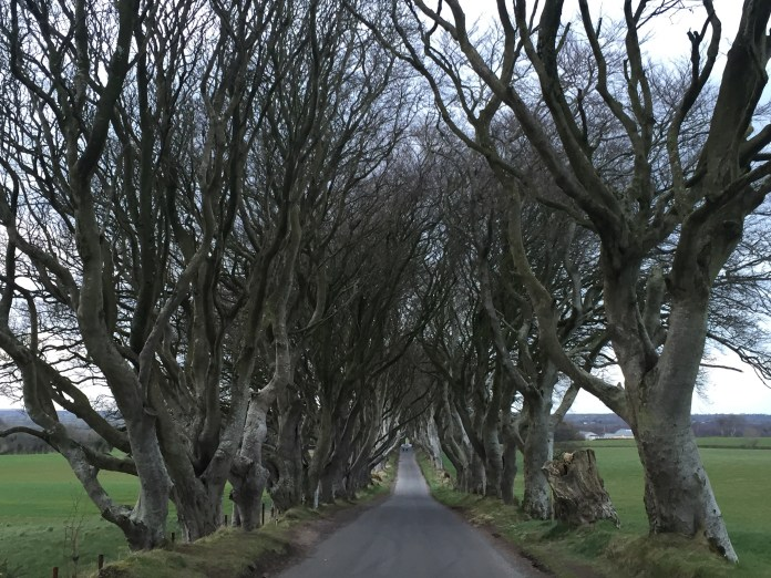 The Dark Hedges (AKA The Kings Road)