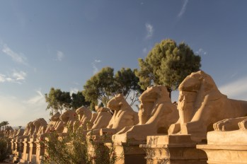 A line of Sphinxes. Notice the small gods underneath them. There is a road that used to have 3km of sphinxes lining it on both sides.