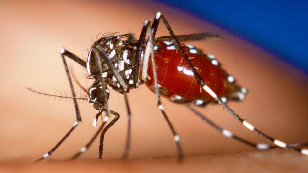Florida reporta 81 casos de virus chikungunya - Este virus es transmitido a través de la picadura del mosquito.