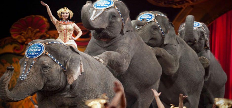 Circos cuentan con un año para adecuar espectáculo sin animales - Foto de chilango.com
