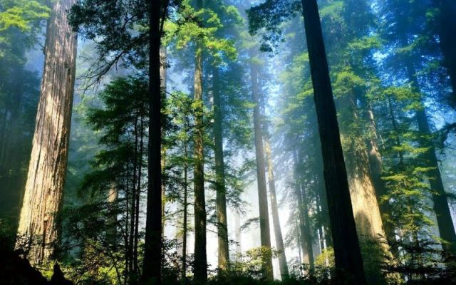 Implementan nuevo software para monitoreo forestal - internet