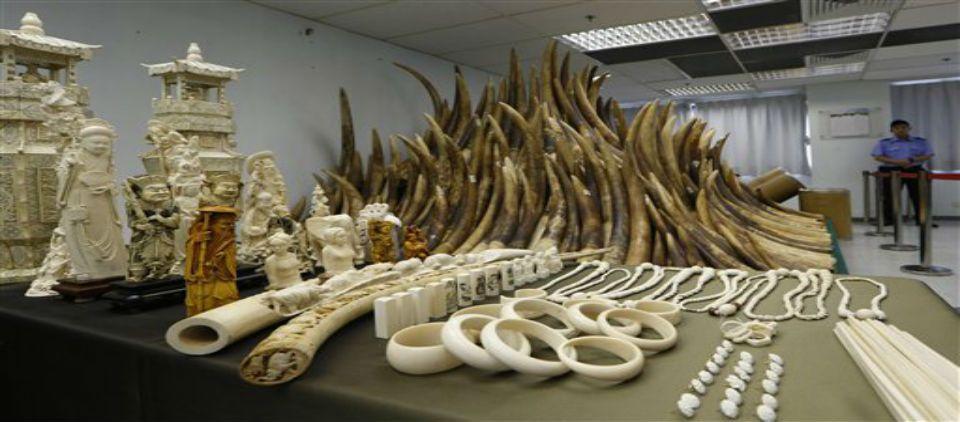 Acusan a funcionarios chinos de tráfico de marfil - Foto de AP