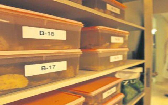 Se pierden 100 cerebros de Universidad de Texas - Foto de Excélsior