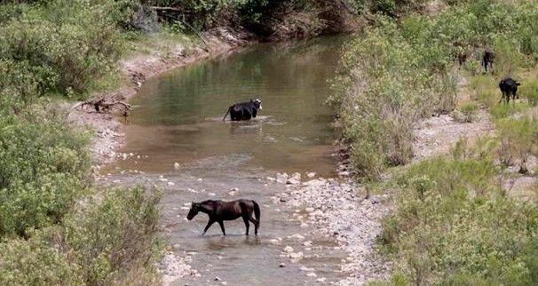 Agua del Río Sonora ya es apta para el consumo - rio sonora