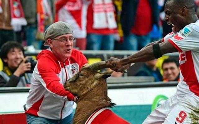 Polémico festejo con una cabra - Polémico festejo con una cabra