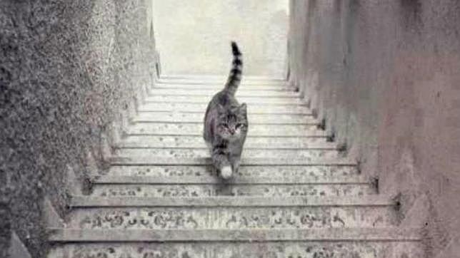 ¿El gato sube o baja? Esta es la respuesta - El gato sube o baja