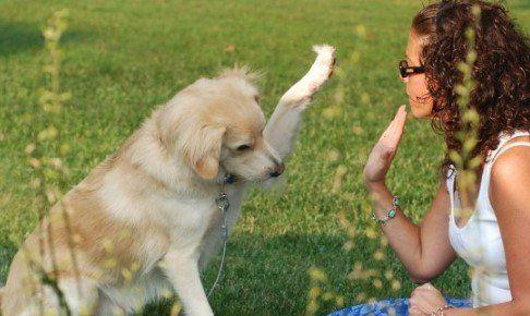 Sancionarán a quien descuide o maltrate animales en el DF - Perro
