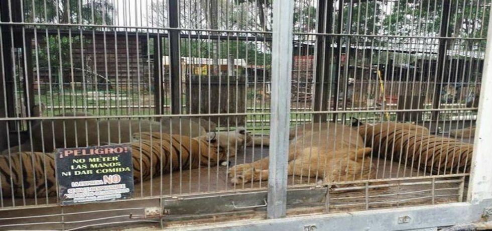 Rescatan 18 felinos de un zoológico de Veracruz - Foto de El Universal