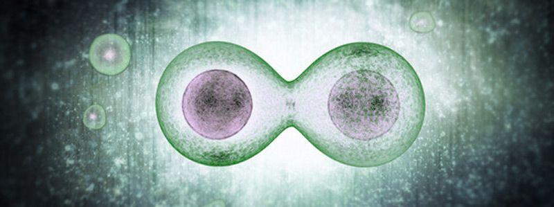 Mexicano desarrolla investigación sobre la mutación celular - Foto de Conacyt
