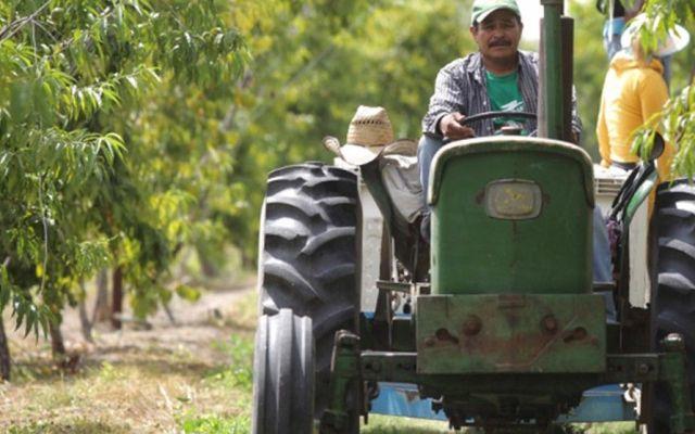 Aumentan créditos para agricultores 36% en un año: SHCP - Foto de cumbre.com.mx